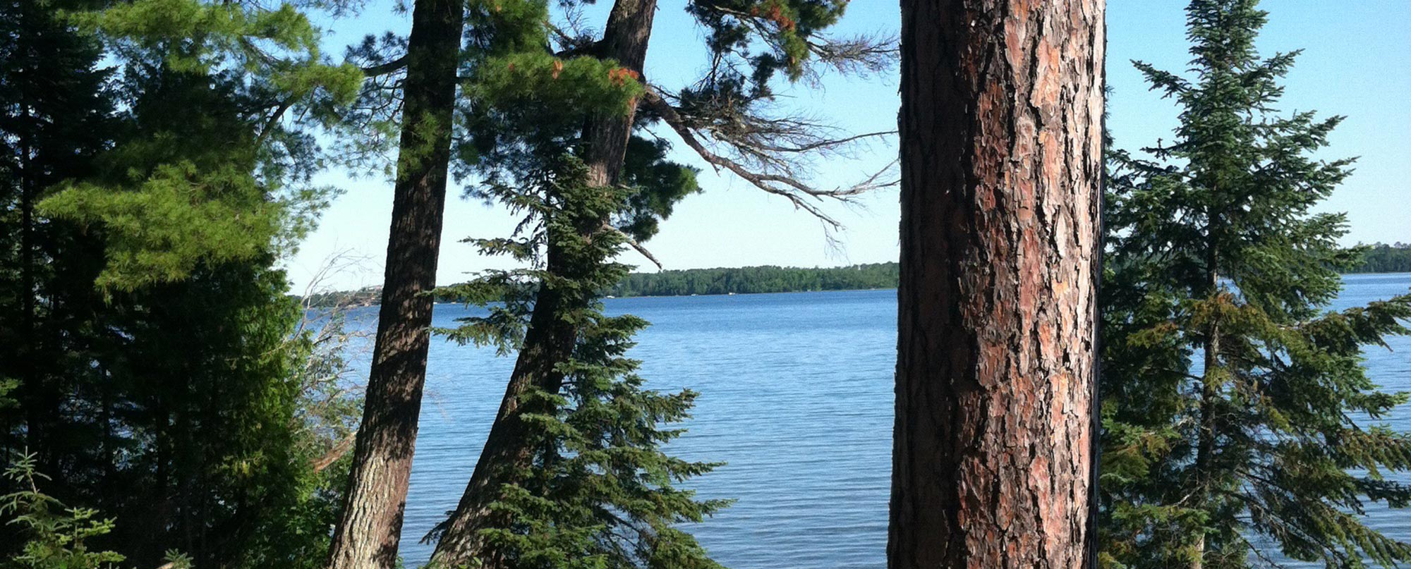 View of a lake between a couple of pine trees